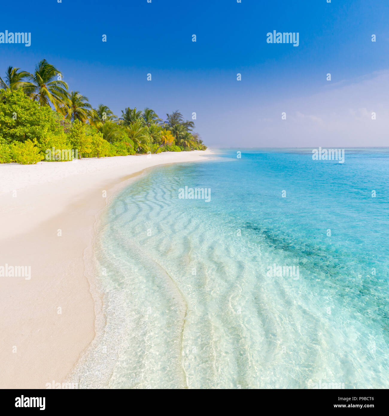 Tranquil beach banner. Palm trees and amazing blue sea view with white sand - Stock Image