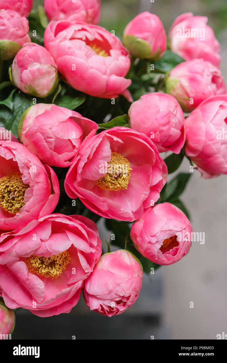 pink peonies. beautiful summer bouquet. floral composition