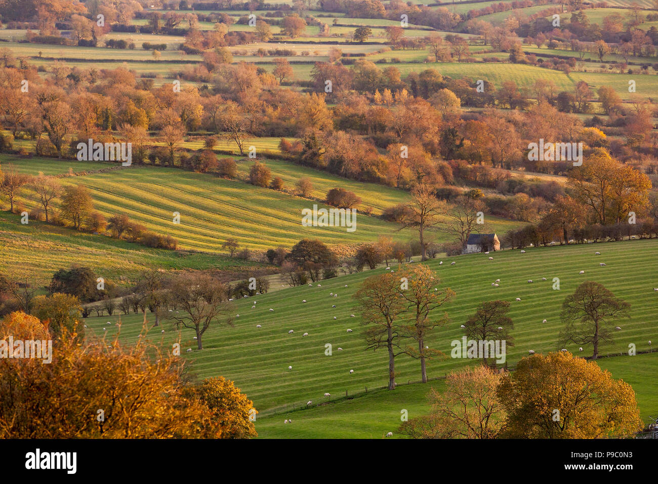 Scenic view across farmland near Brassington in the Derbyshire Dales, England, UK - Stock Image