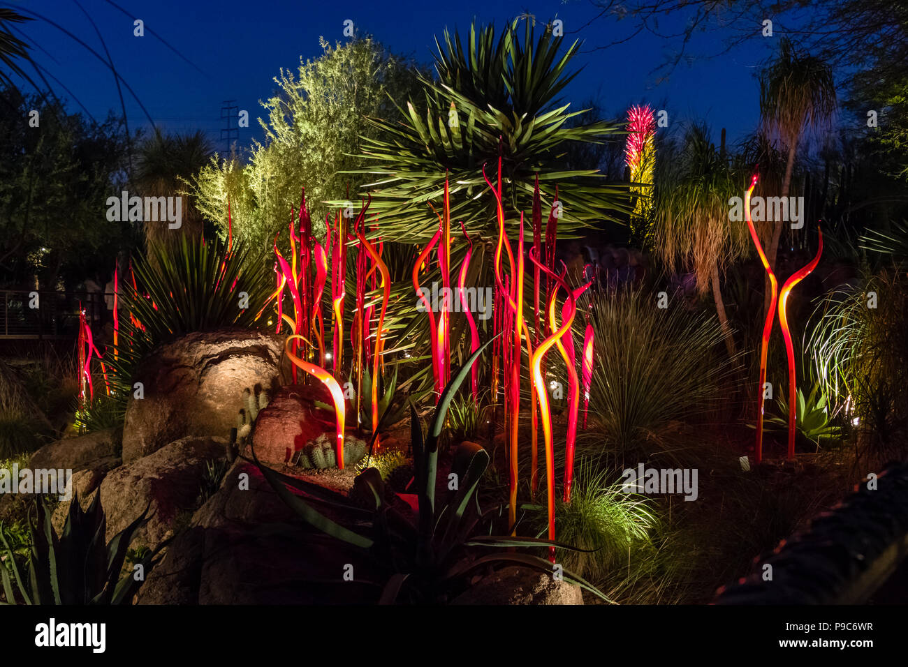 Chihuly Cattails at Desert Botanical Garden at Night Stock Photo ...