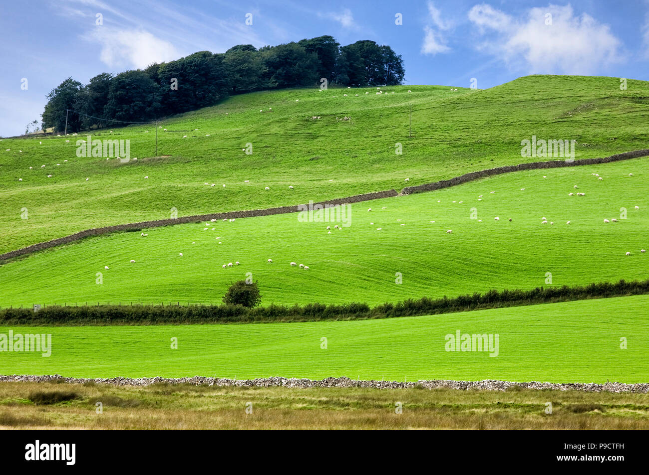 Green fields field and hills at Caldbeck in the Lake District National Park, Cumbria, England, UK - Stock Image