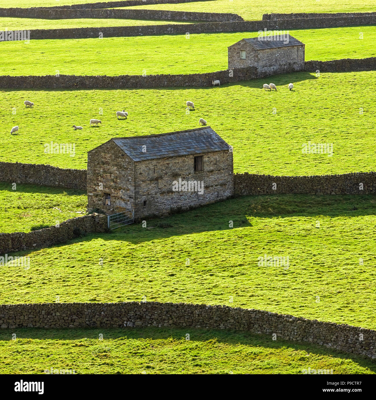 Stone barns and dry stone walls at Gunnerside in the Yorkshire Dales National Park, England, UK - Stock Image