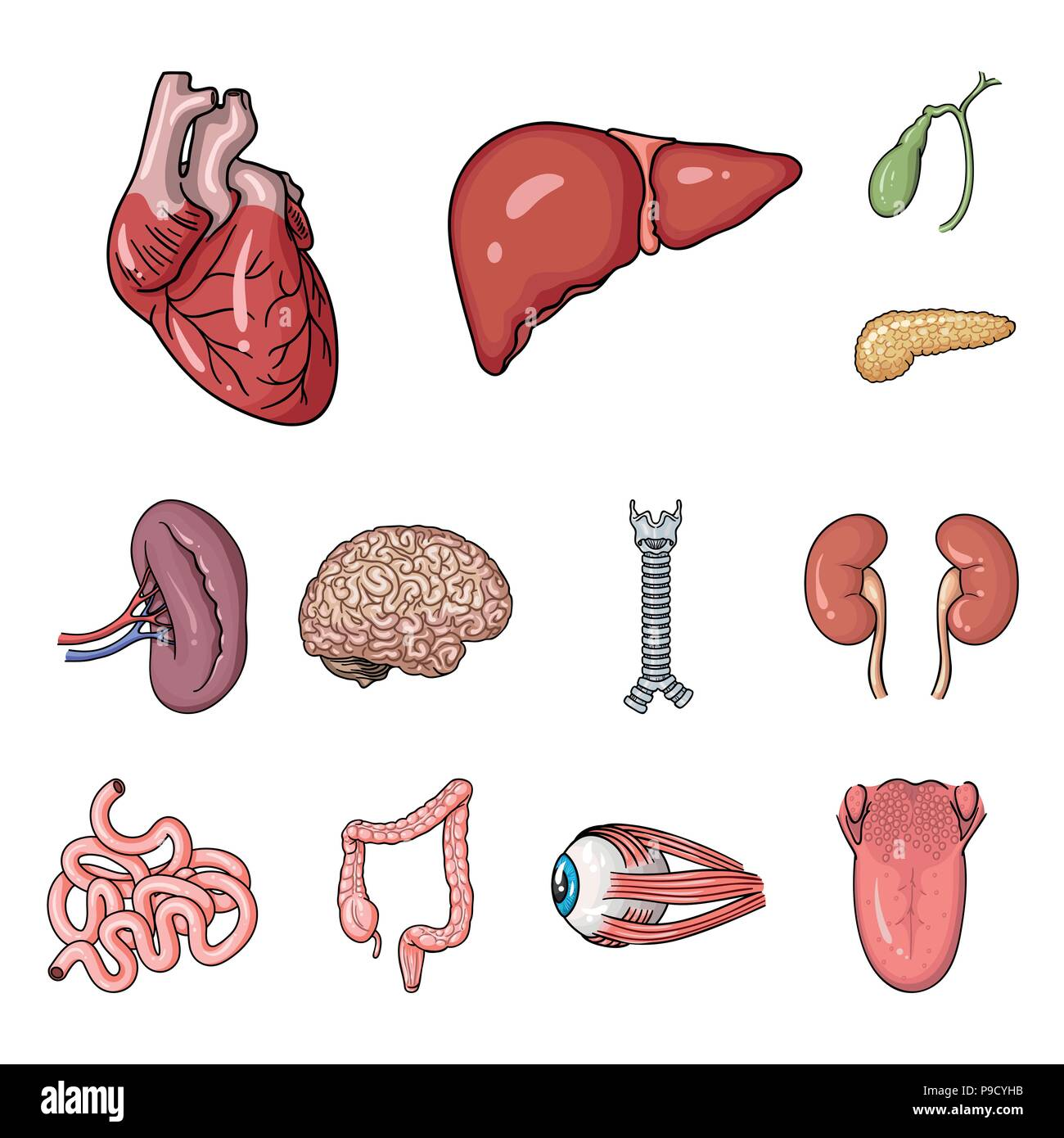 Human Organs Cartoon Icons In Set Collection For Design Anatomy And