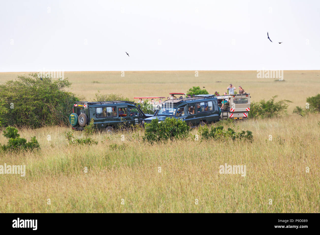 Safari game drive with tourists on the savannah in Africa - Stock Image