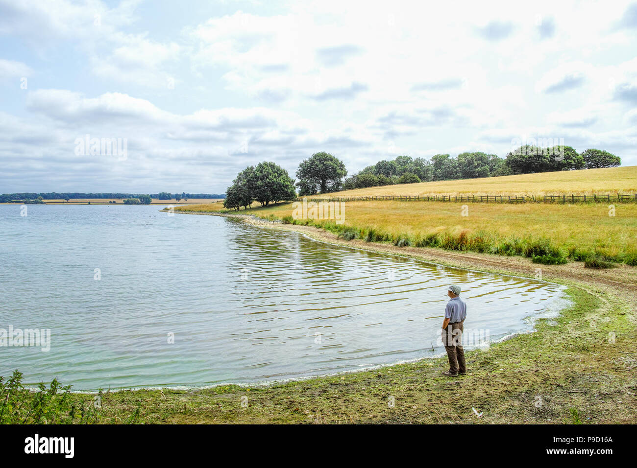 A man stands on the shore of a lake in a parkland on a summer's day in rural England. - Stock Image