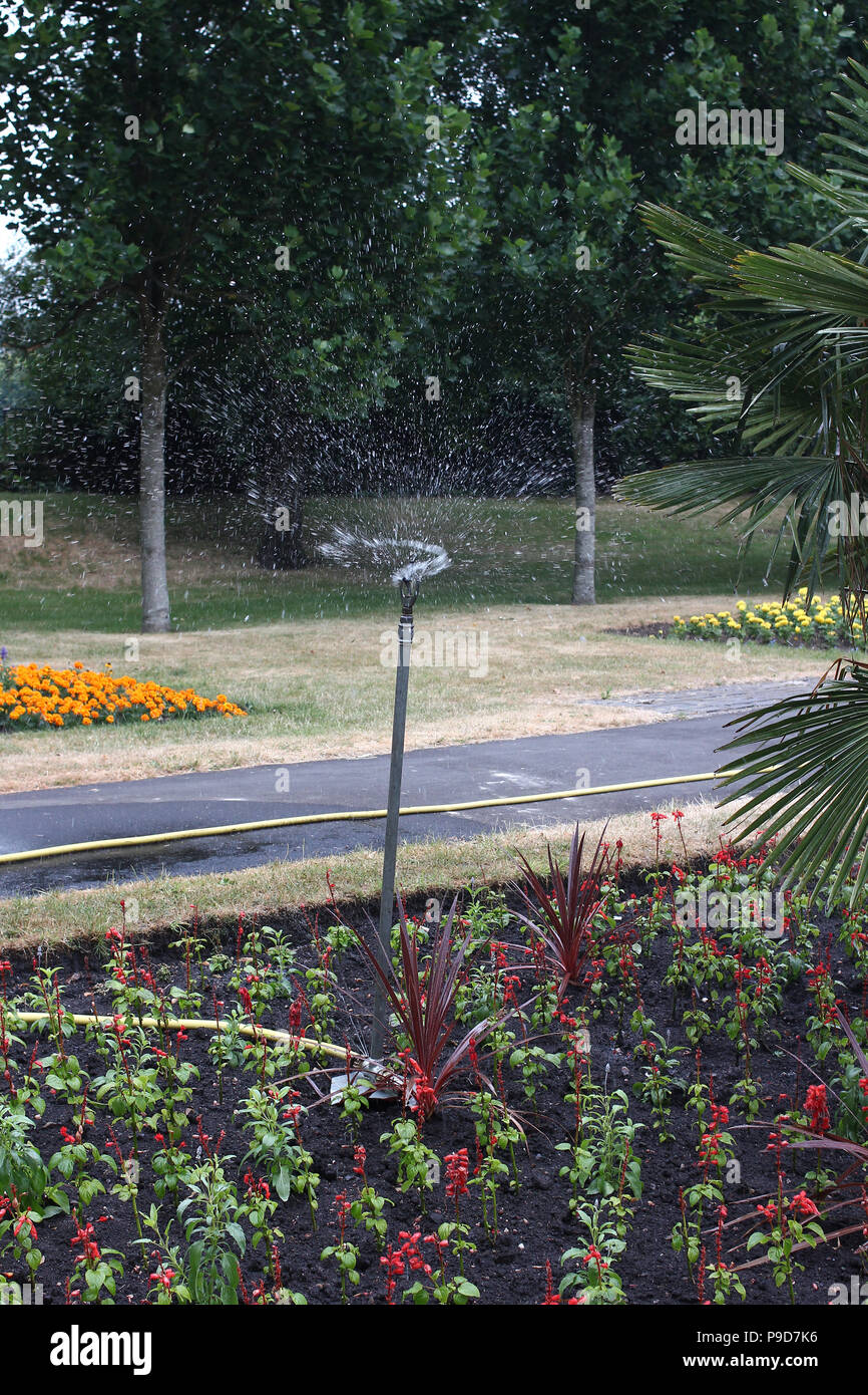 Summer watering in drought - Stock Image