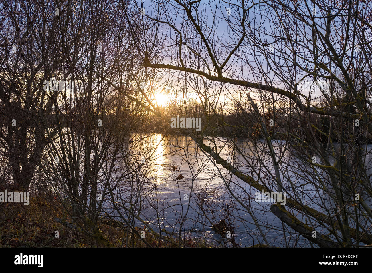 Setting sun, bare trees, Ill river, wintertime, Alsace, France, Europe, - Stock Image