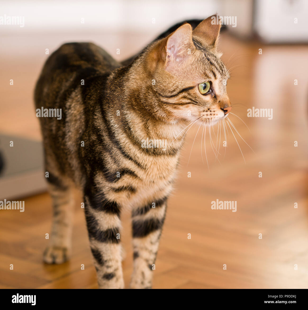 Domestic cat at home Stock Photo