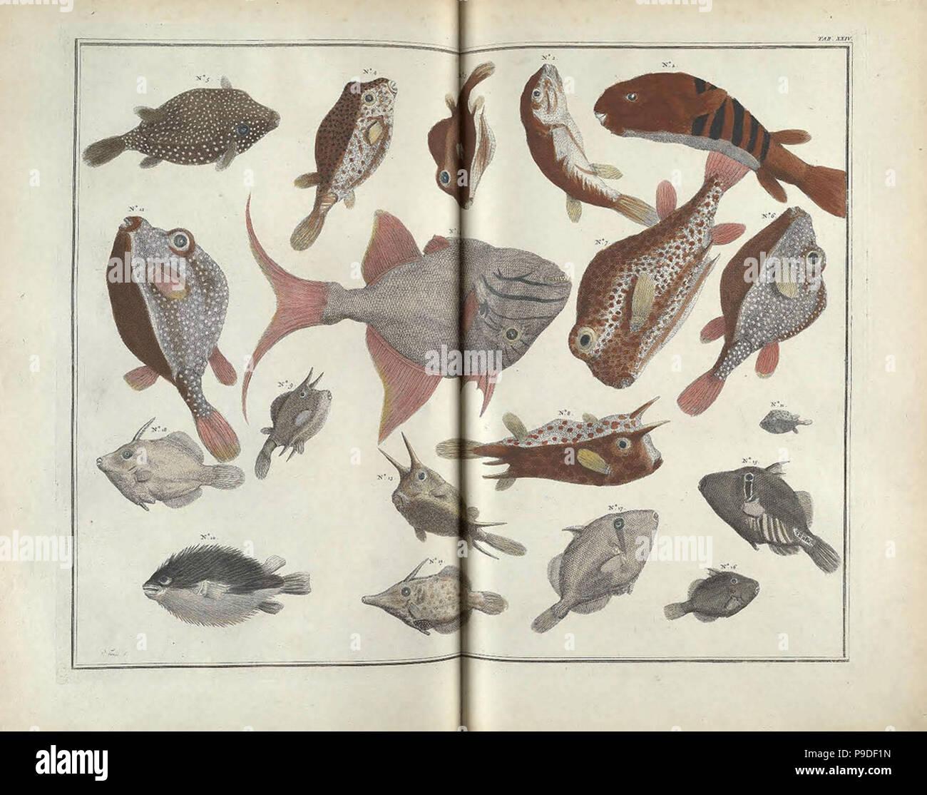vintage sealife illustration - Stock Image