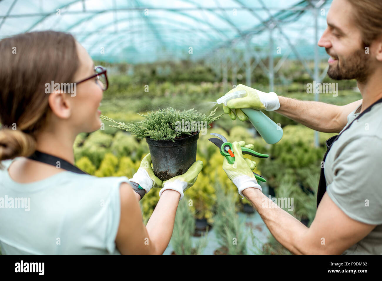 Watering green plant - Stock Image