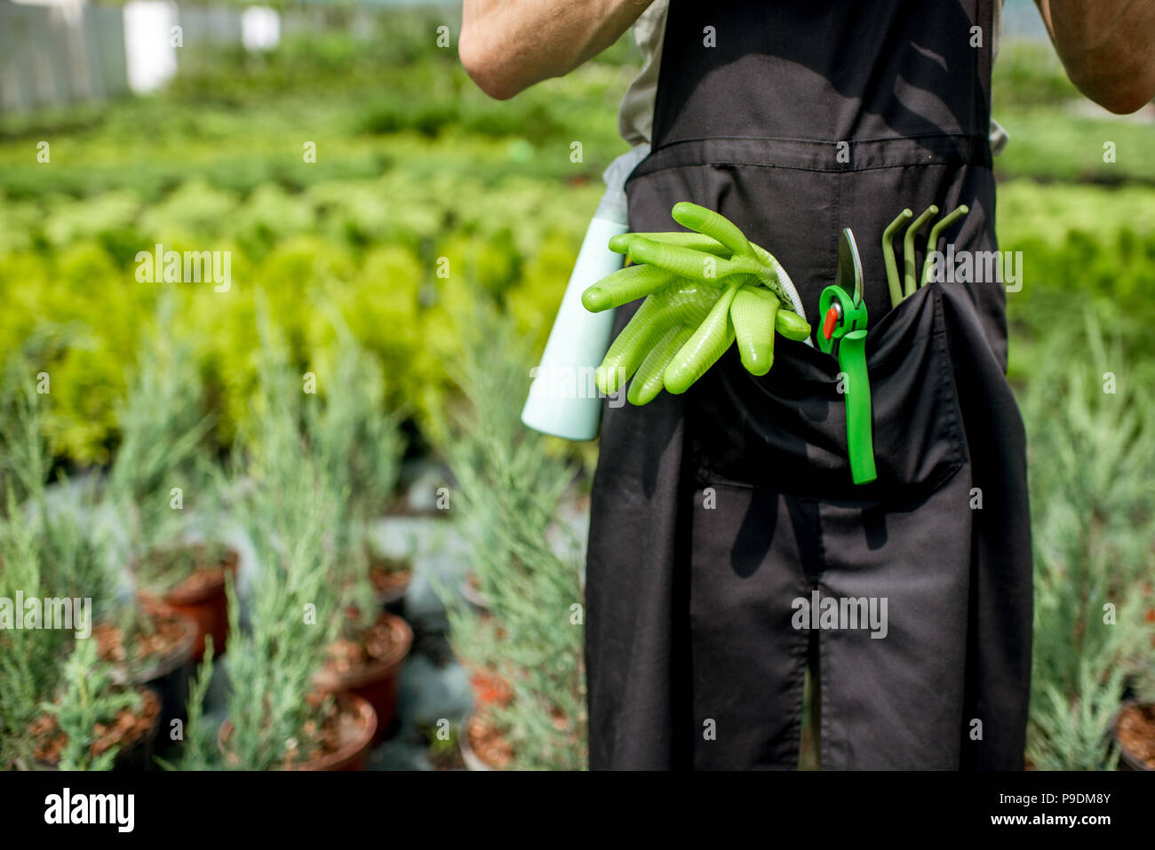 Tools for gardening in the pocket of the gardener - Stock Image