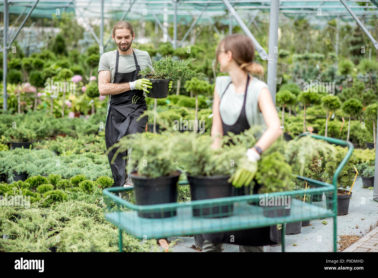 Workers putting plants on the cart - Stock Image