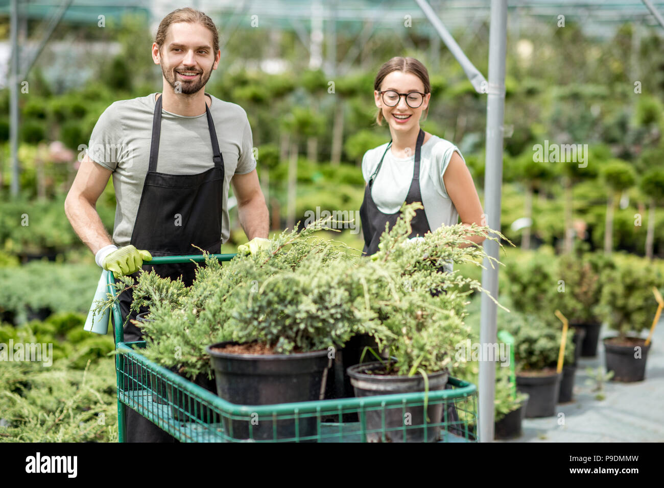 Workers with shopping cart in the greenhouse Stock Photo