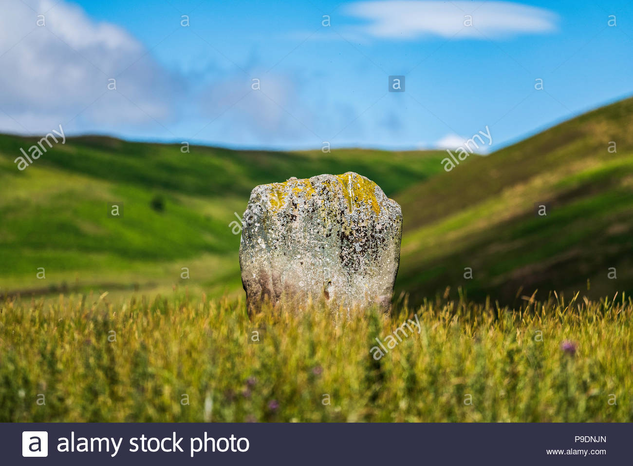 Yarrow, Selkirk, Scottish Borders, UK. 4th July 2018. A standing stone amongst grazing pasture in the Yarrow Valley. - Stock Image