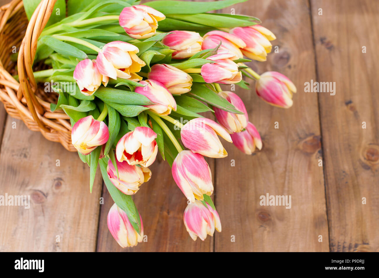 Bright Spring Flowers In A Wooden Box Stock Photos Bright Spring