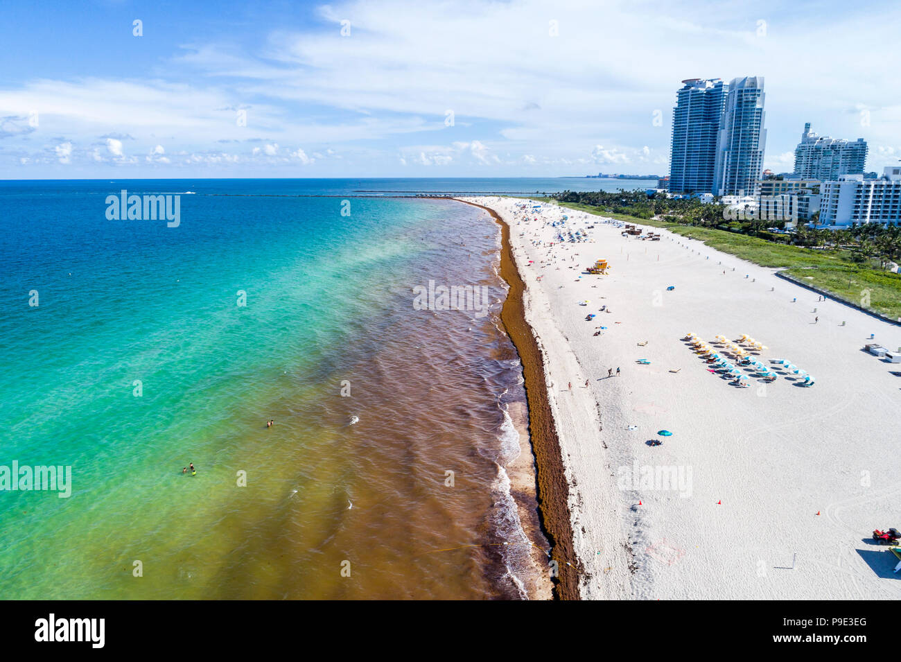 Miami Beach Florida Atlantic Ocean shore shoreline seaweed