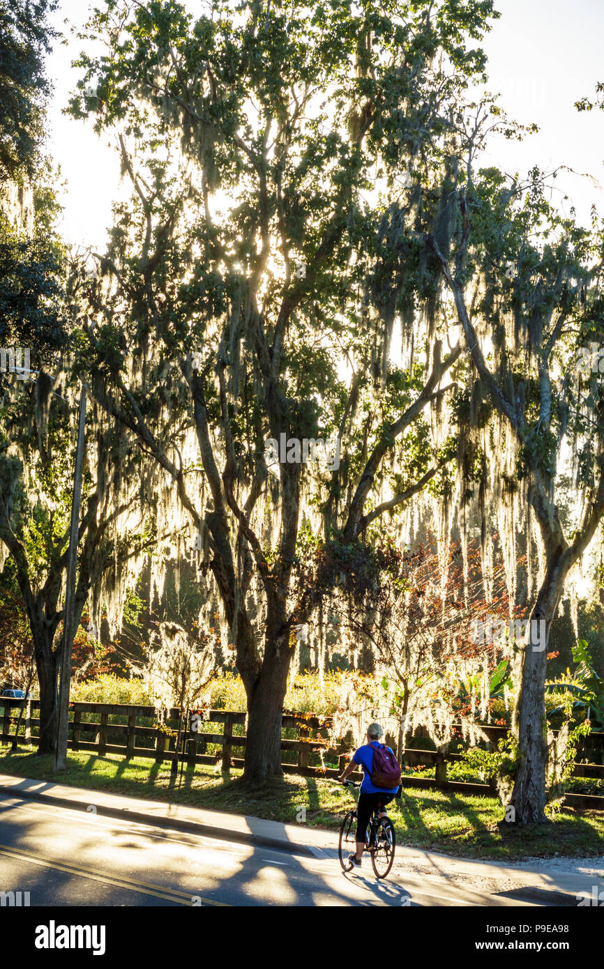 Florida Gainesville University of Florida campus Museum Road Spanish moss student boy teen bicycle lane - Stock Image