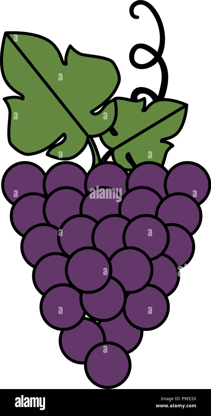 grapes cluster isolated icon - Stock Vector