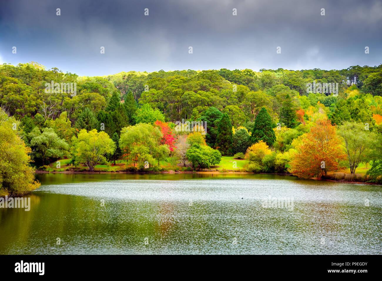 Colorful Australian autumn in Mount Lofty, South Australia - Stock Image