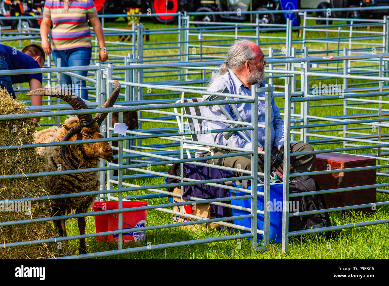 Man at Northumberland County Show waiting for competition results for his Hebridean sheep, UK. - Stock Image