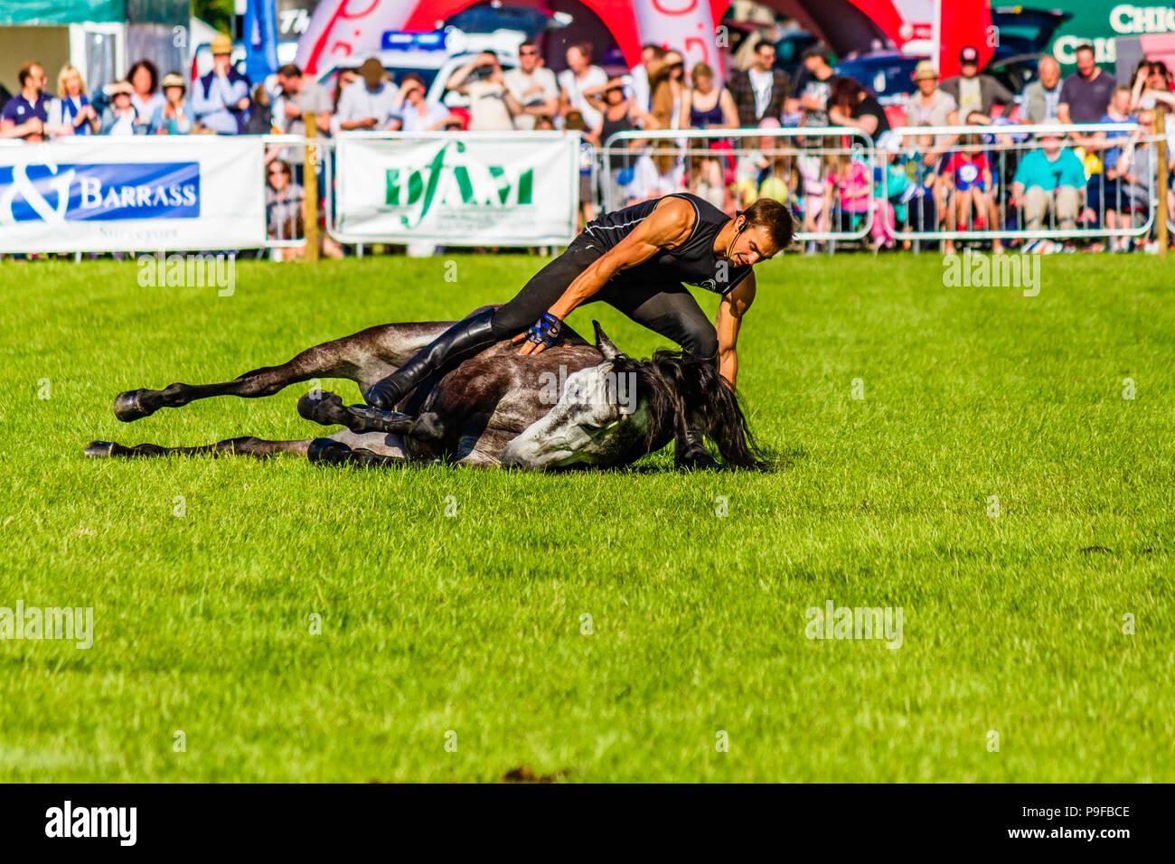 Stunt horseman from Atkinson Action Horses performing at Northumberland County Show 2018, UK. - Stock Image