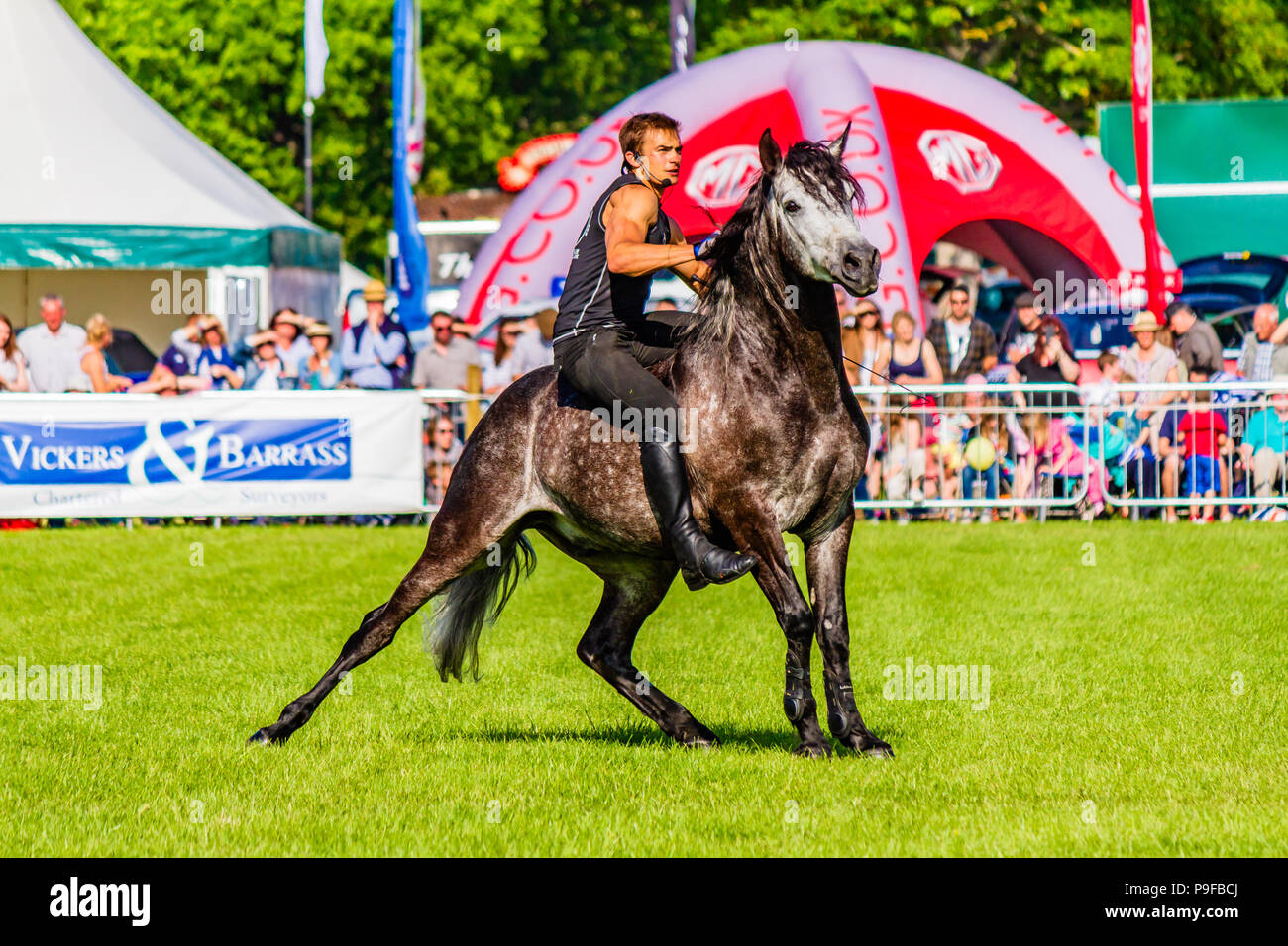 Stunt horseman from Atkinson Action Horses performing at Northumberland County Show 2018, UK. Stock Photo