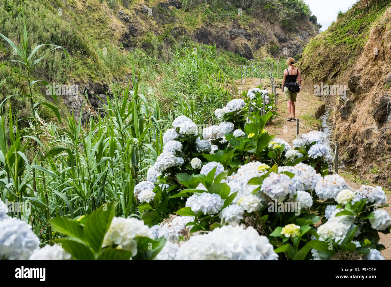 A woman walking on a coastal path on the north coast  of Sao Miguel, The Azores - Stock Image