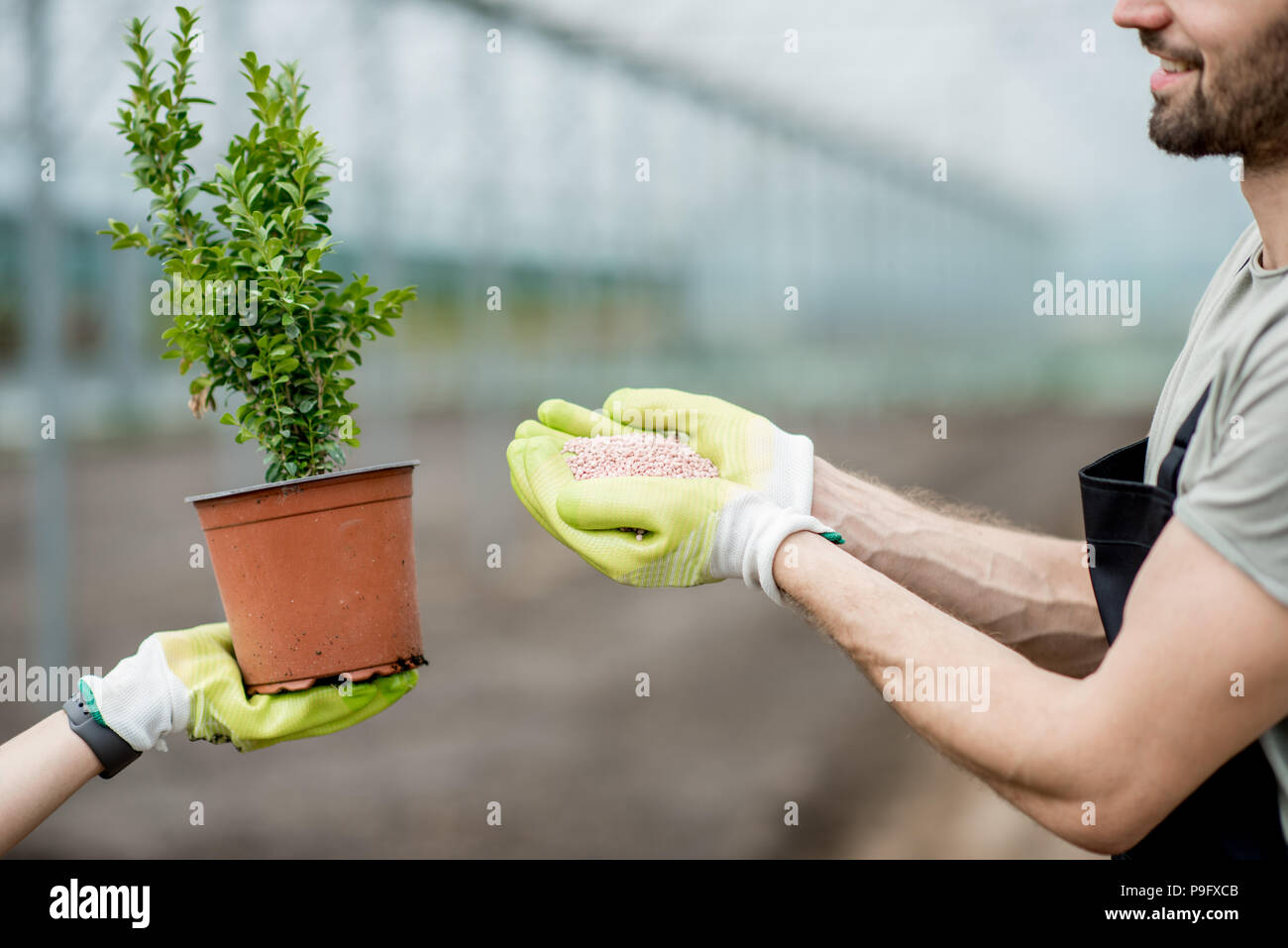Farmer holding mineral fertilizers with green plant - Stock Image