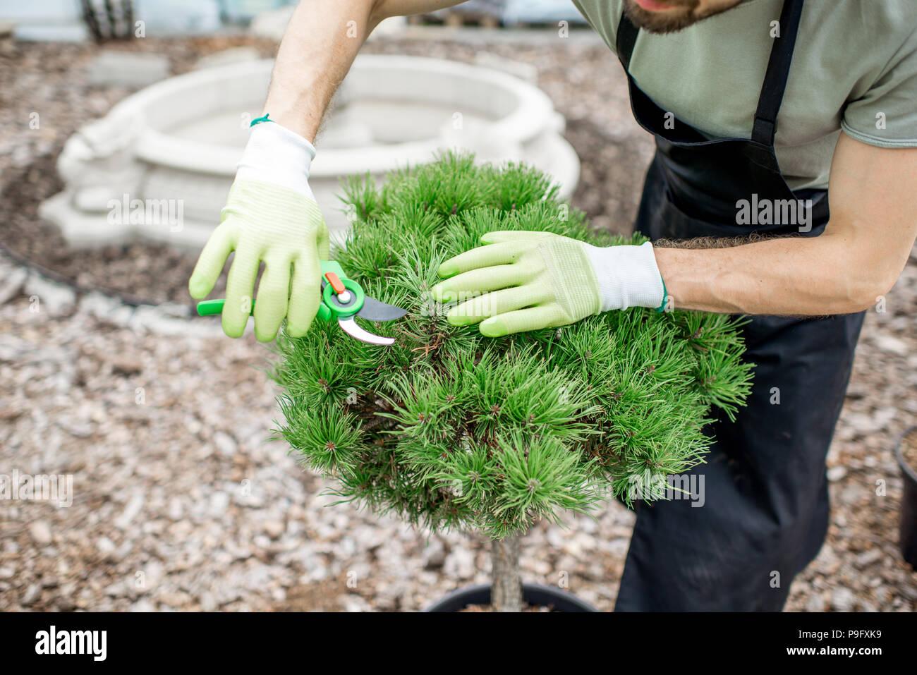 Gardener working in the garden - Stock Image