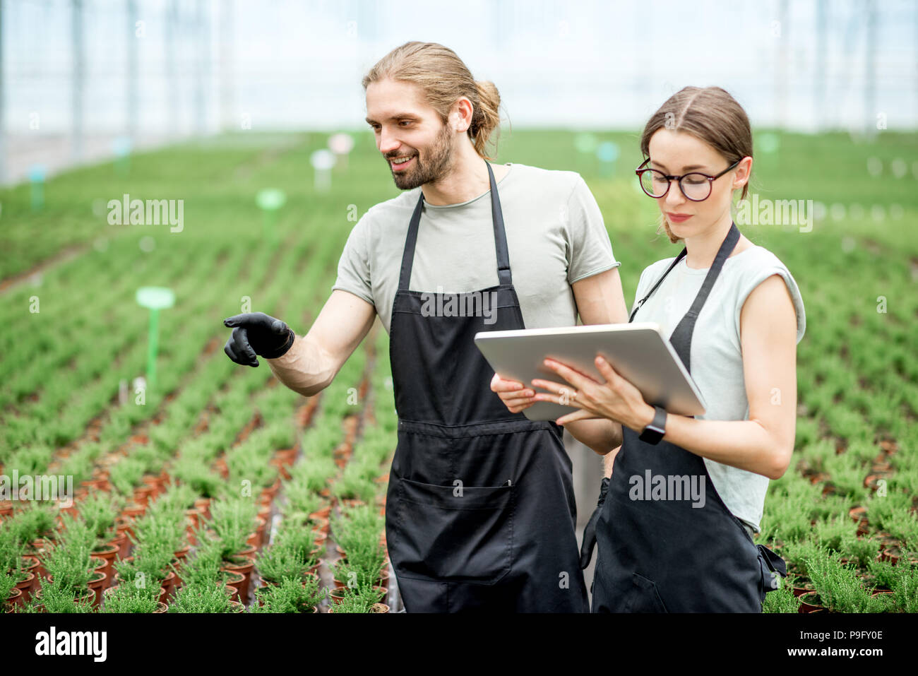 Workkers with digital tablet in the greenhouse - Stock Image