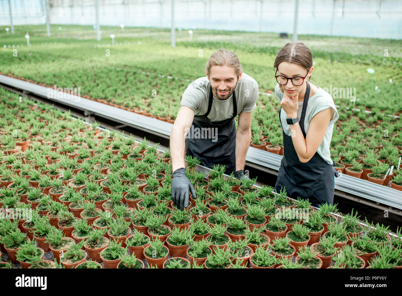 Workers in the greenhouse of plants production - Stock Image