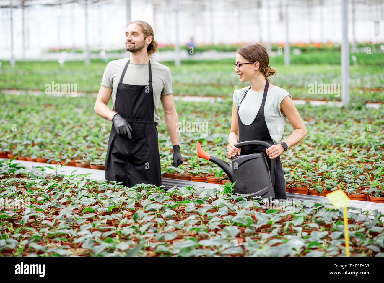 Workers at the plant production greenhouse - Stock Image