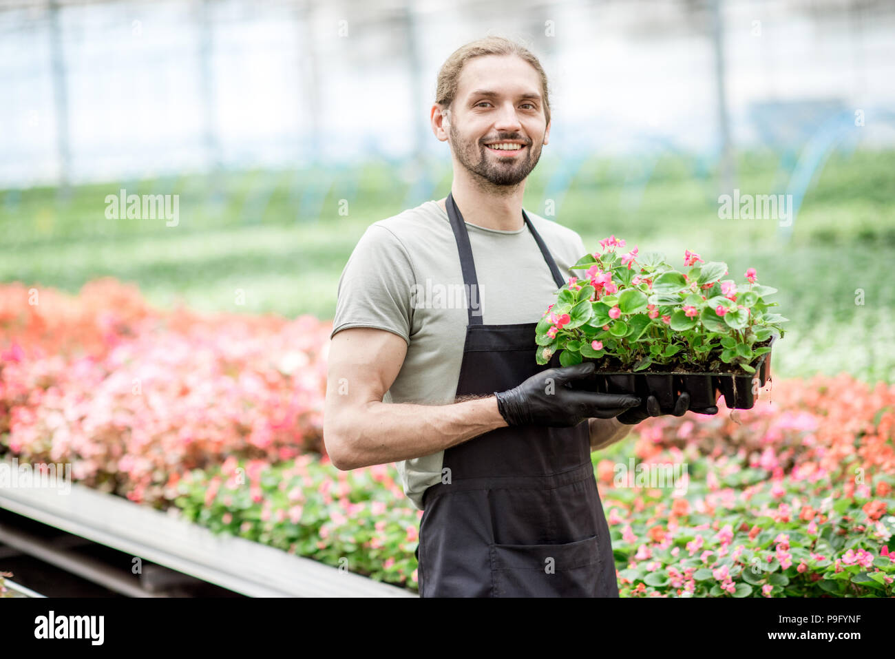 Worker with flower in the greenhouse - Stock Image