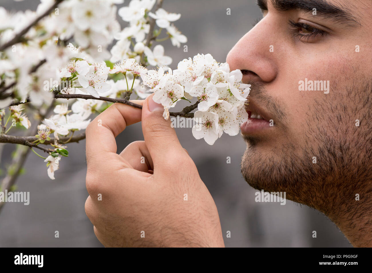 Young man enjoying from spring time plum tree buds odor, close-up portrait. - Stock Image