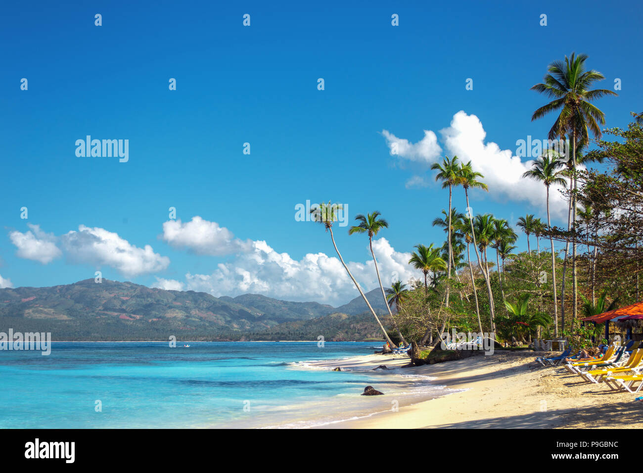 empty beautiful Caribbean beach with white sand, sunbeds and high palm trees. Dominican Republic - Stock Image