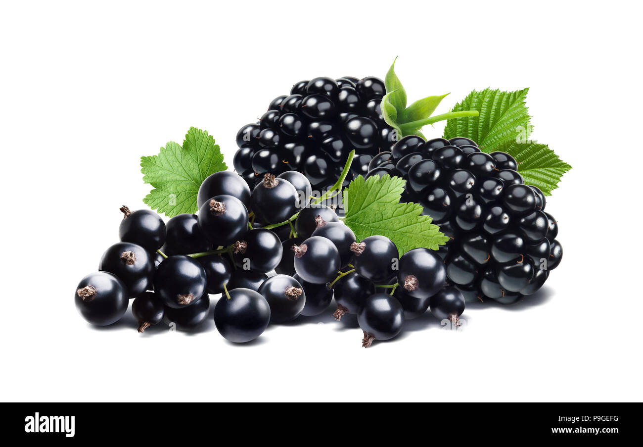 Blackberry and black currant isolated on white background as package design element Stock Photo