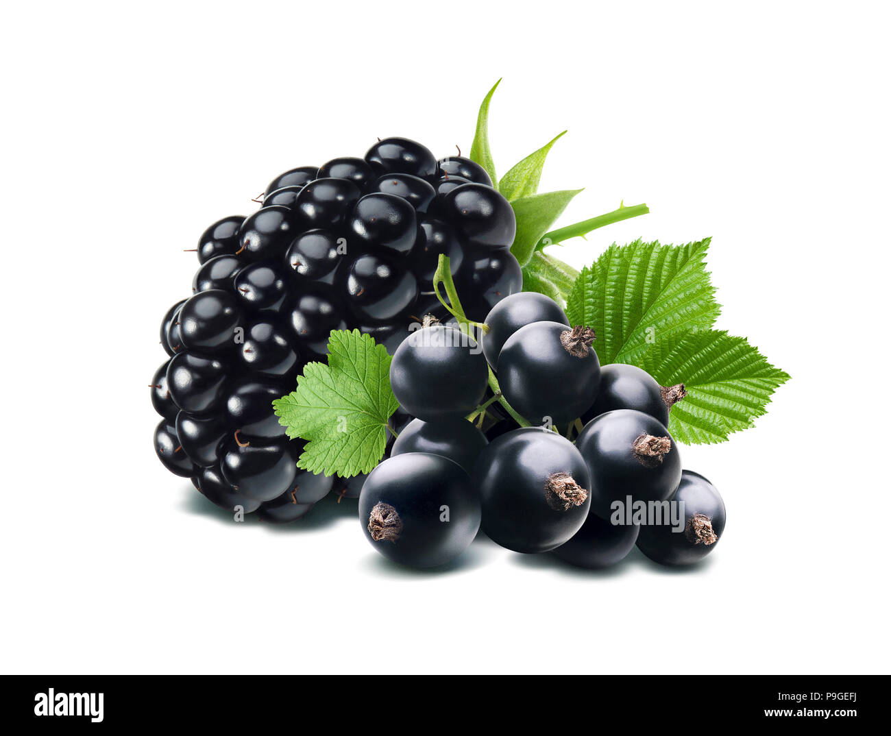 Black currant and blackberry composition isolated on white Stock Photo