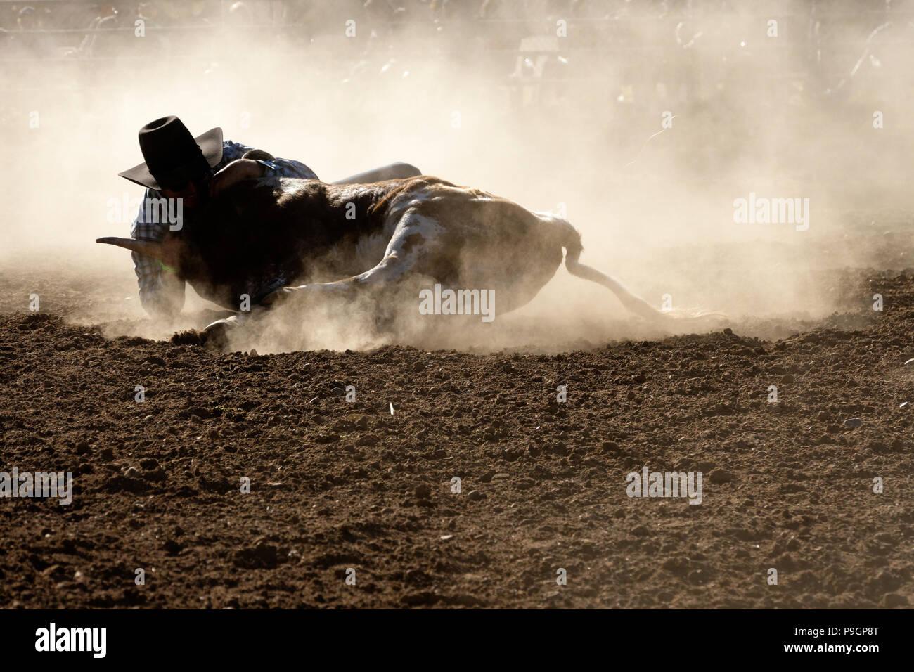 Rodeo Cowboy Australia Stock Photos Amp Rodeo Cowboy