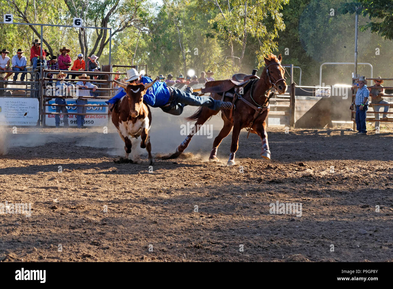 Cowboy leaping from horse to bring  a steer to ground at the Fitzroy crossing rodeo show, Fitzroy crossing, Kimberley,Northwest Australia - Stock Image