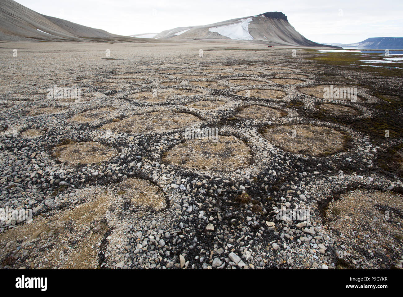 Natural Stone Circles Caused By Cryoturbation in a Polar Desert. Zeipelodden, Svalbard - Stock Image