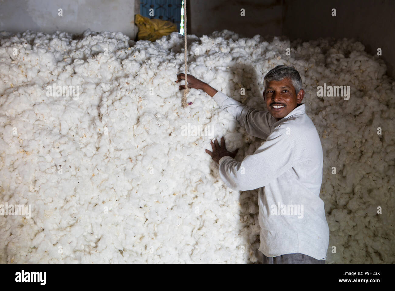 A cotton farmer storing his cotton harvest, Ahmedabad, India. - Stock Image