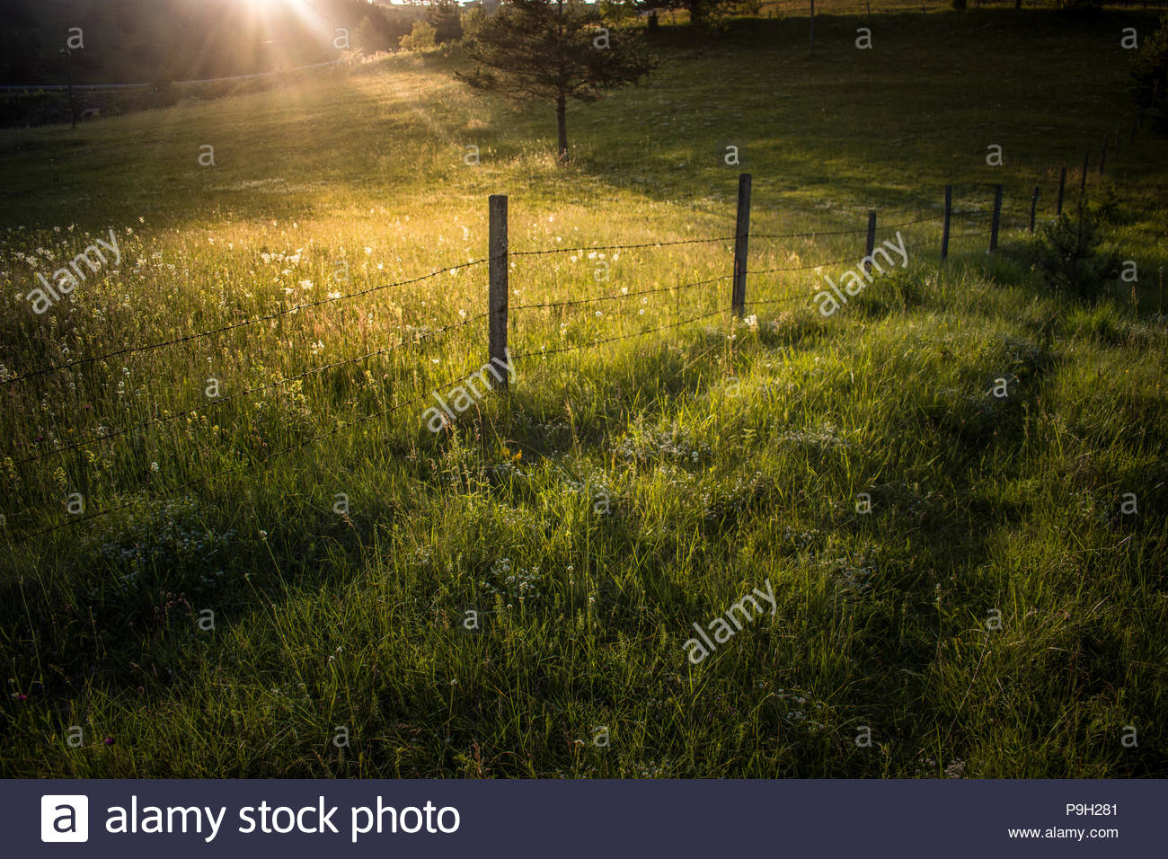 Countrside , Serbia - Stock Image