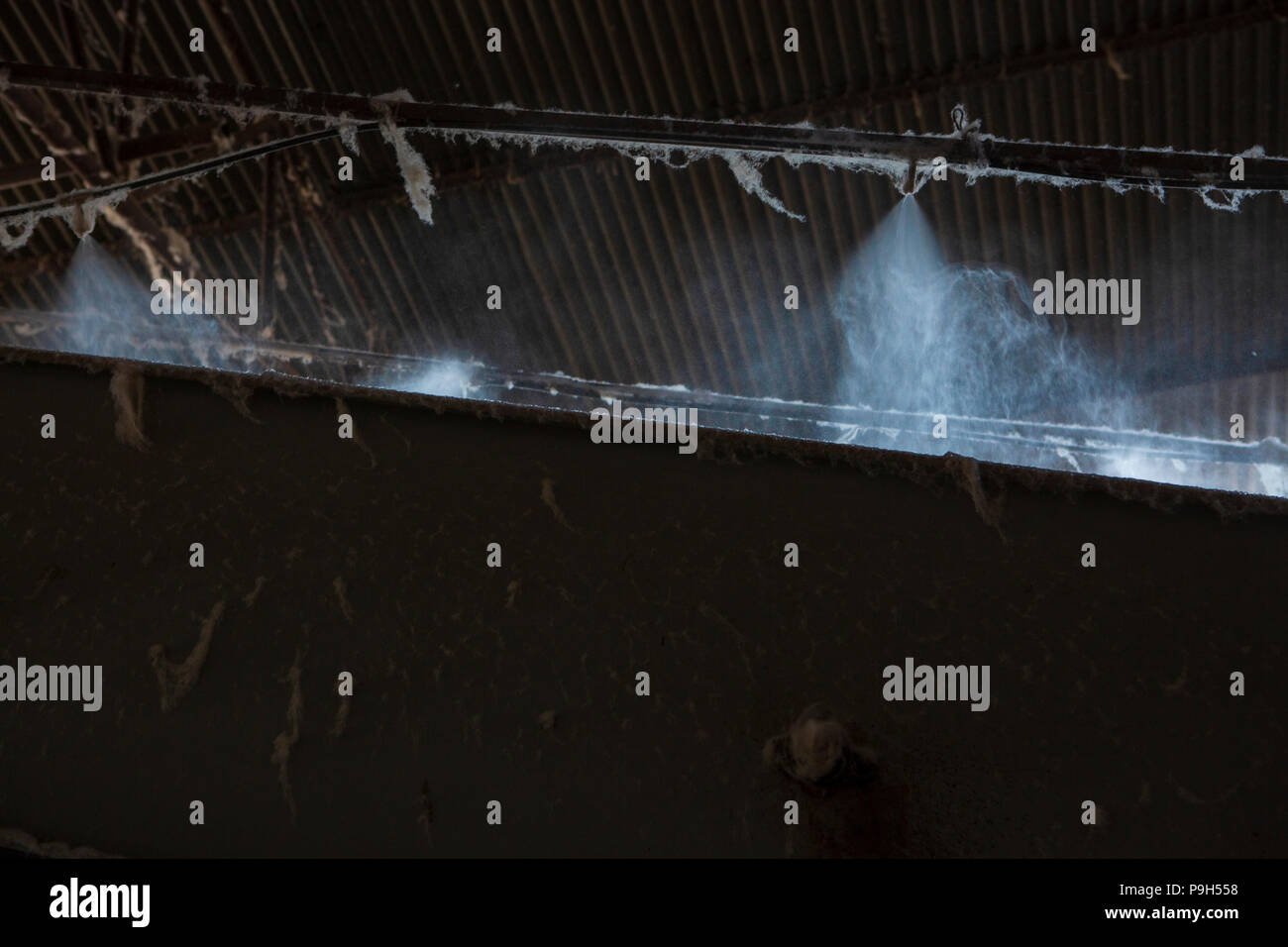 Organic cotton being dampened by water being sprayed at a cotton ginners in Madhya Pradesh, India. Stock Photo