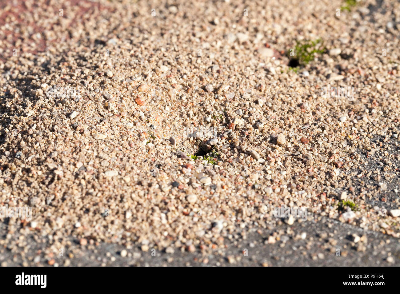A small anthill with scattered grains of sand near his entrance  an
