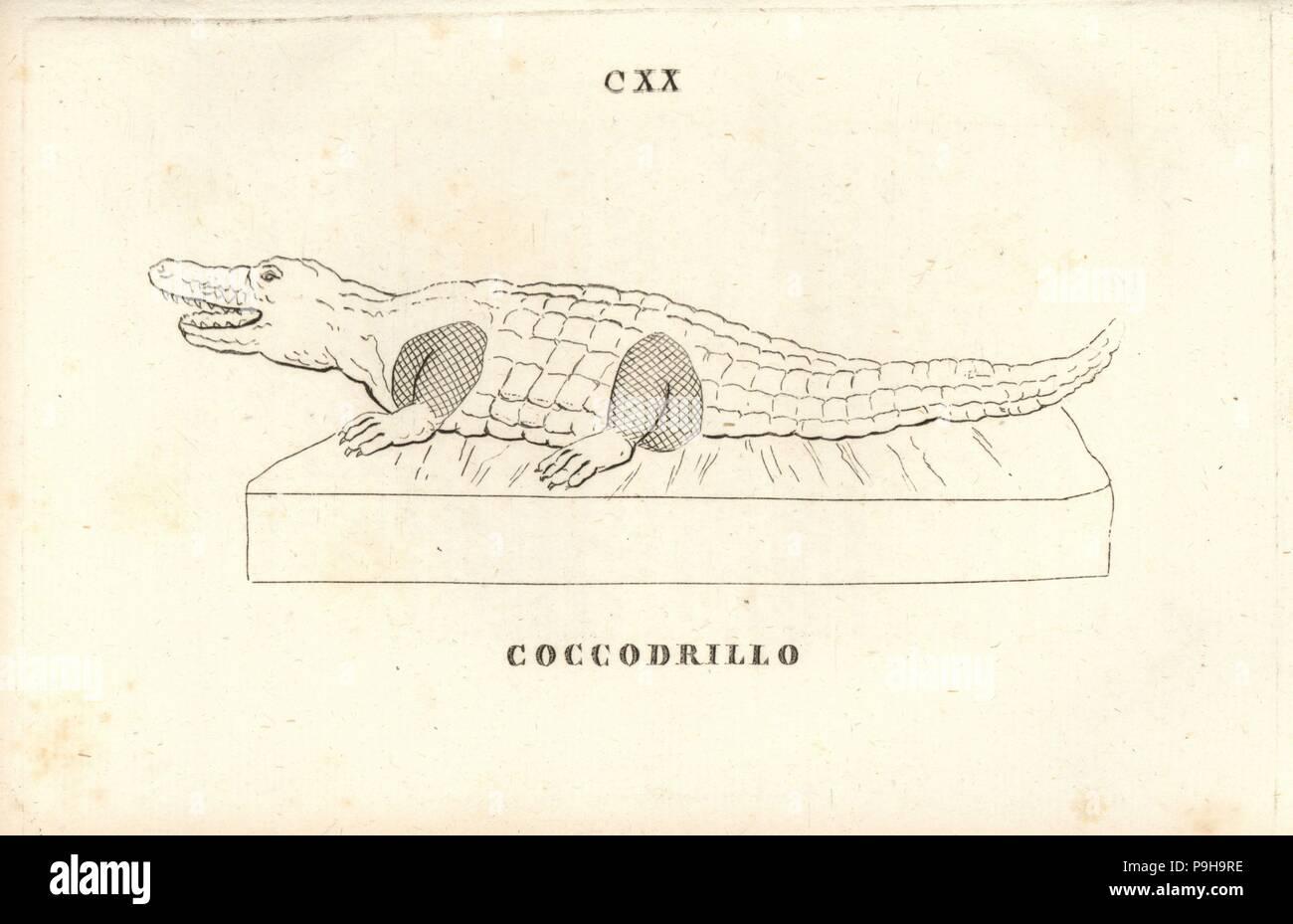 Statue of a crocodile. Copperplate engraving from Pietro Paolo Montagnani-Mirabili's Il Museo Capitolino (The Capitoline Museum), Rome, 1820. Stock Photo