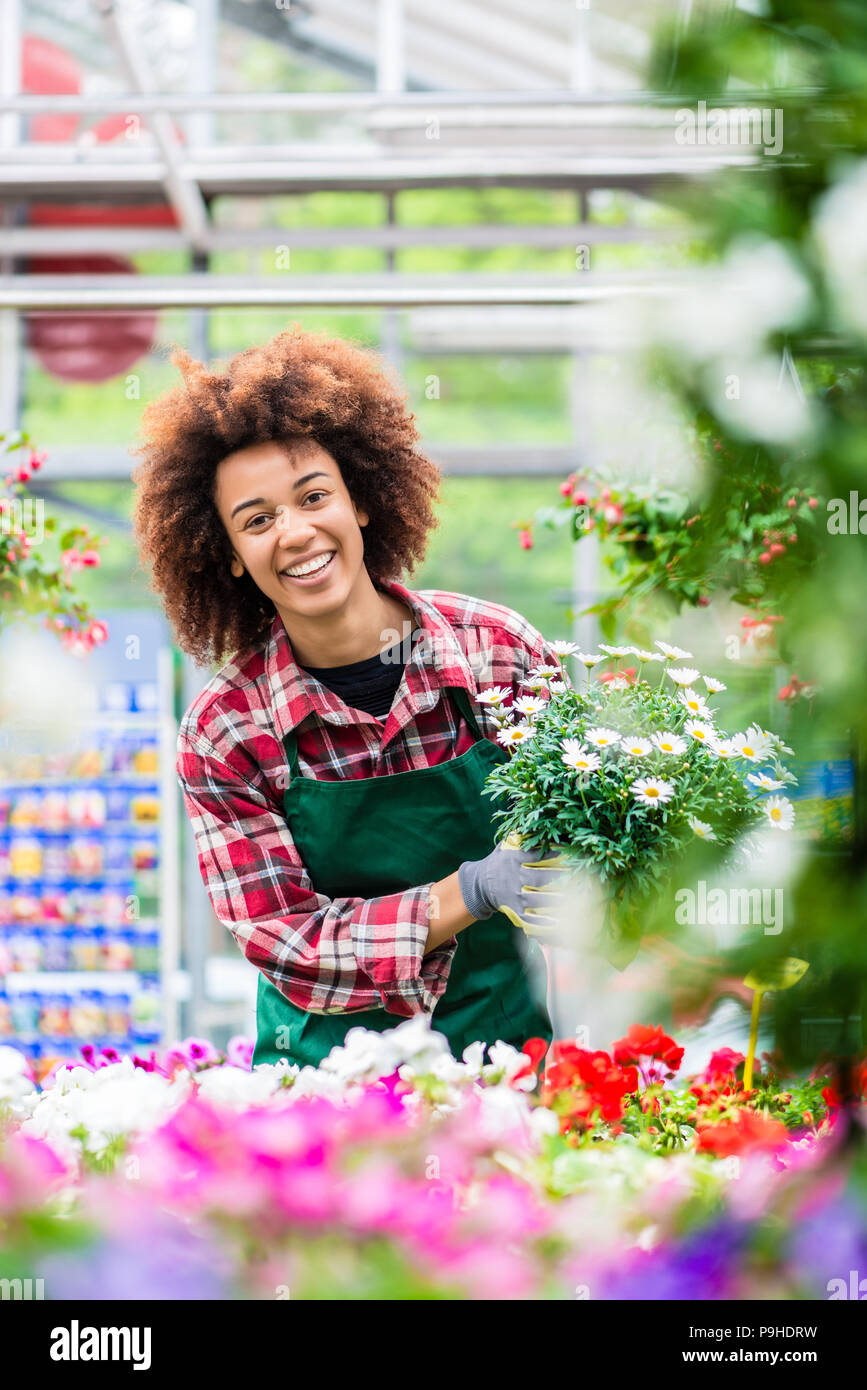 Florist smiling while holding a beautiful potted daisy flower plant for sale - Stock Image