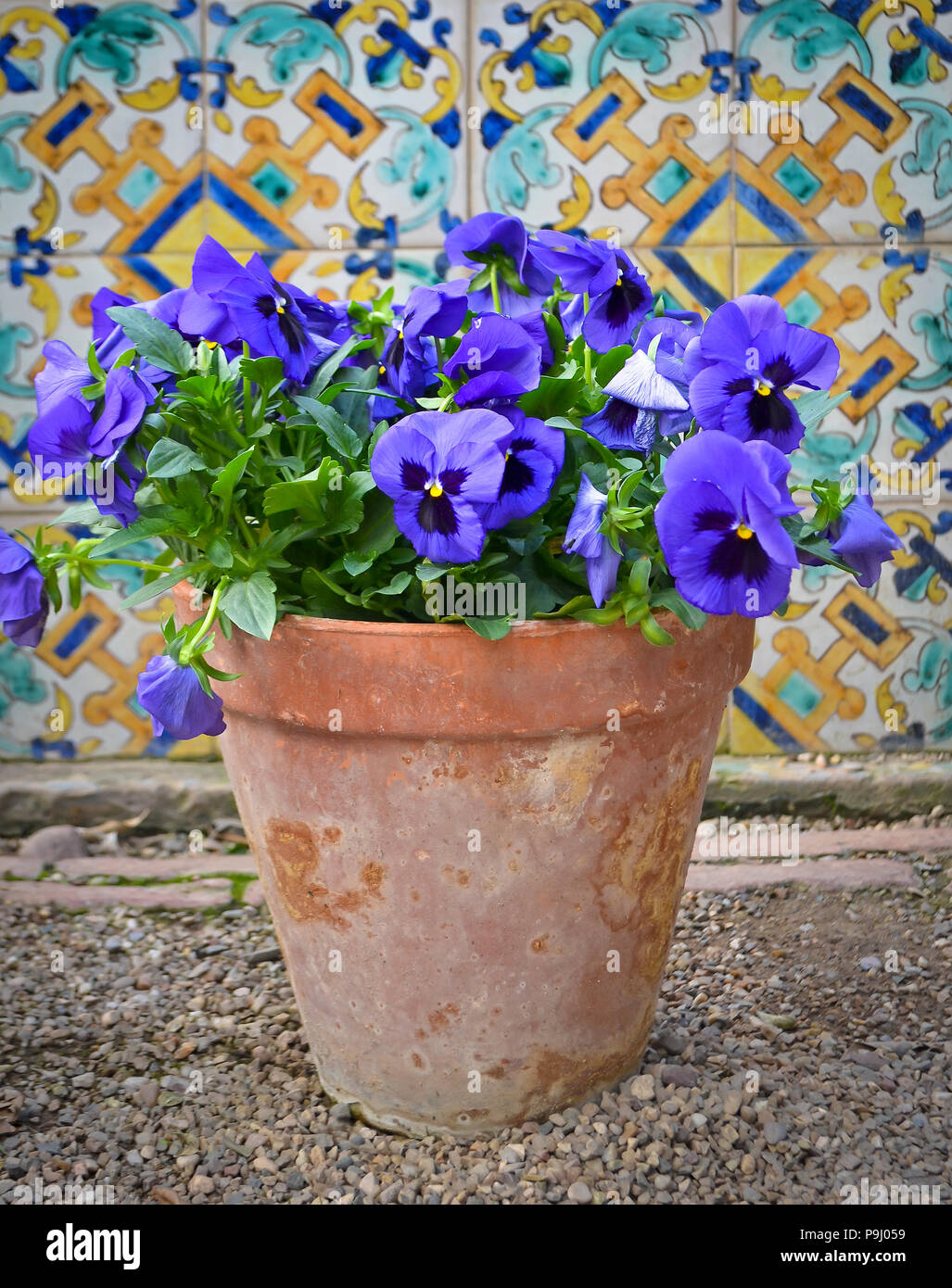 Violet blue pansy flowers in a terracotta flowerpot against colourful  Andalusian tiles in Spain Stock Photo