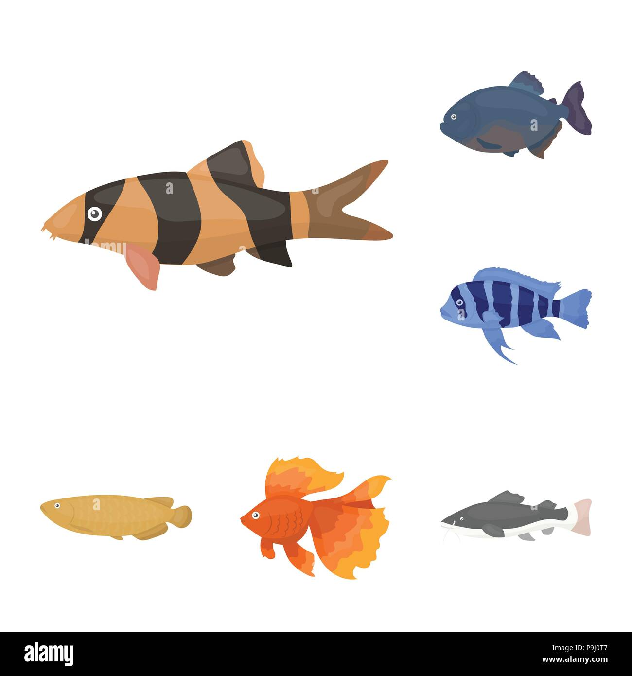 Different Types Of Fish Cartoon Icons In Set Collection For Design