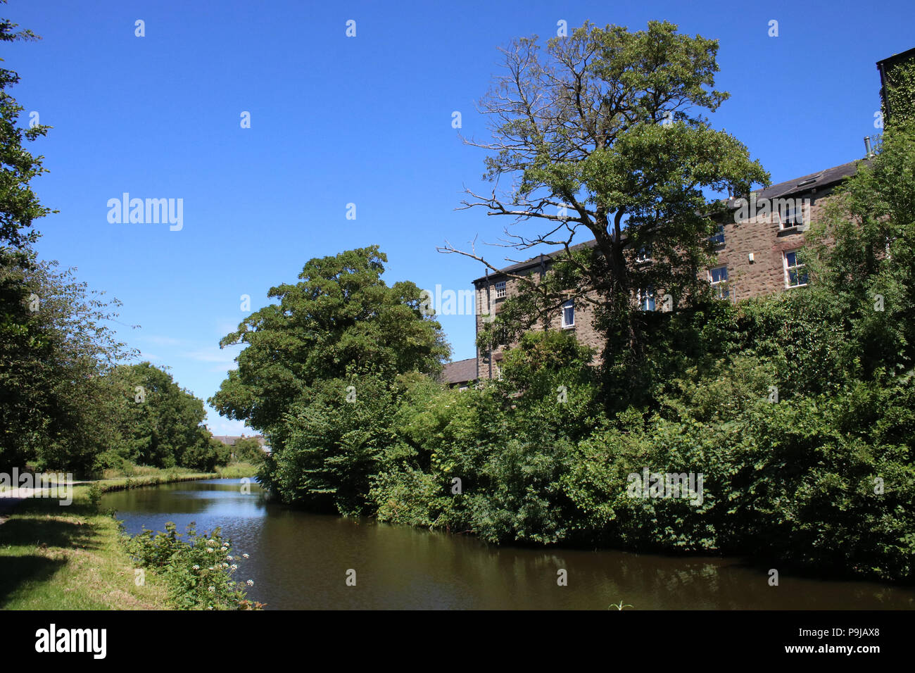 View along the Lancaster canal in the Freehold area of  Lancaster, Lancashire, England from near Moor lane looking along the towpath. - Stock Image