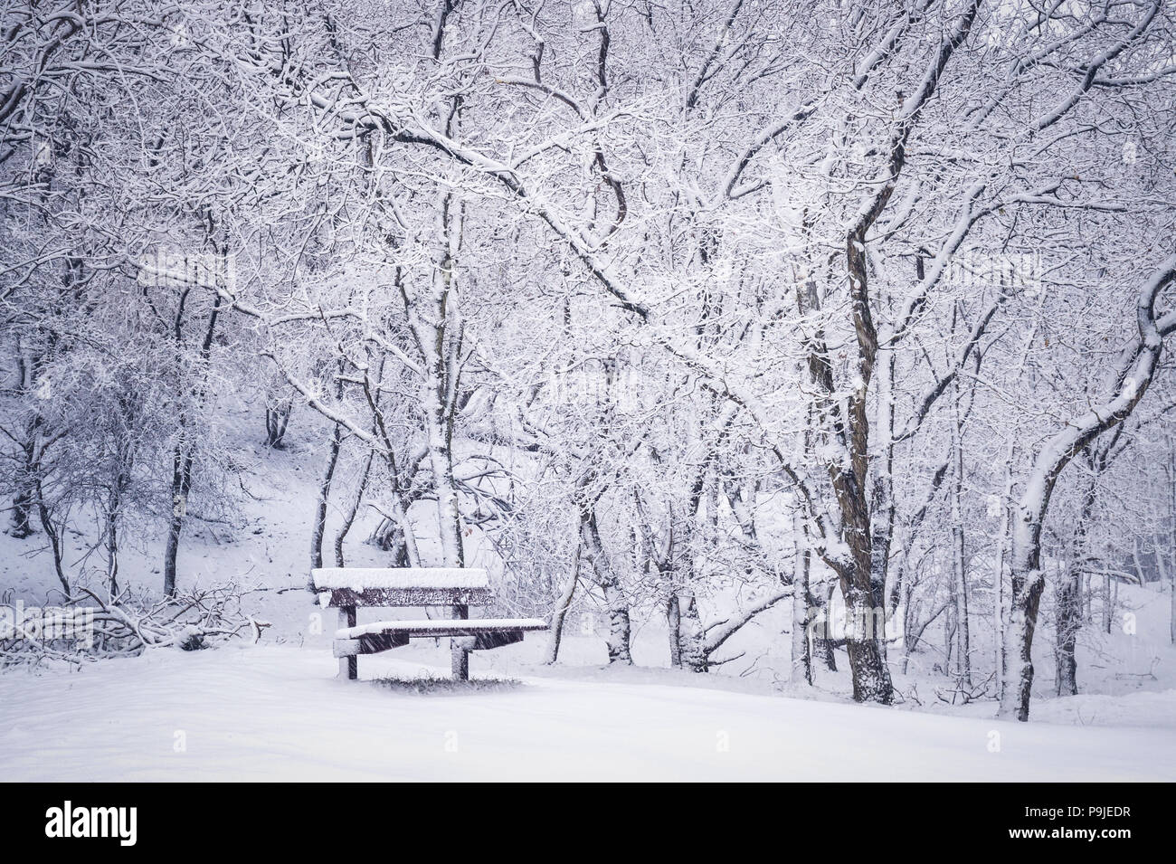 Abstract image with falling snow and bench in forest during winter, Amsterdamse waterleiding duinen, Netherlands. - Stock Image